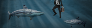 Blood in the water: 5 warning signs your company is swimming with VC sharks